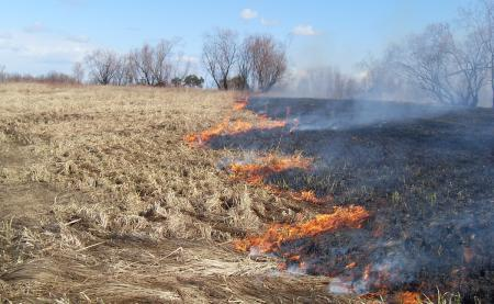 Сжигание сухой растительности запрещено