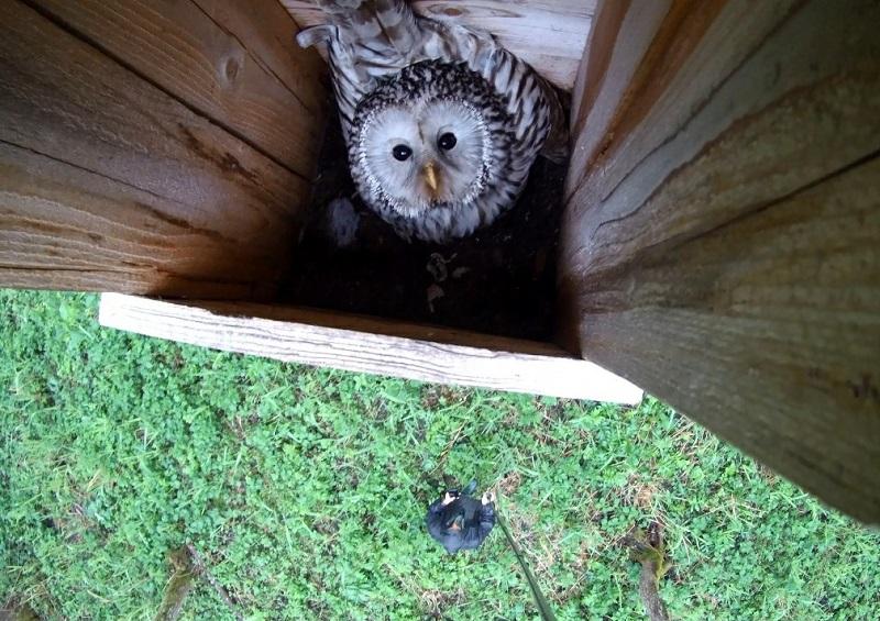 Новости Коломны   Редкие птицы заселили искусственные гнездовья региона Фото (Коломна)   iz zhizni kolomnyi