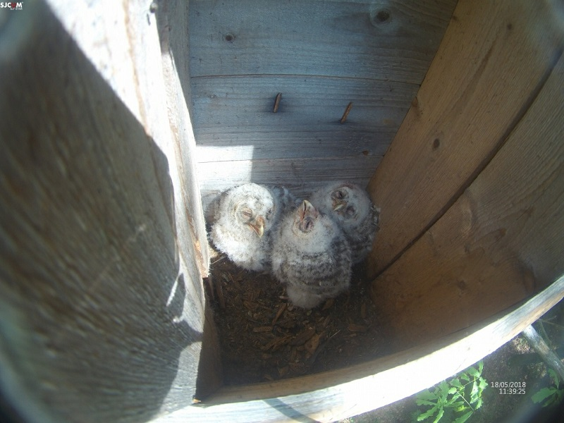 Редкие птицы заселили искусственные гнездовья региона