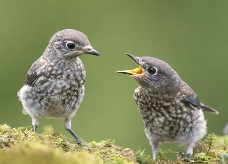 Минэкологии напоминает: в июне слетки покидают гнезда