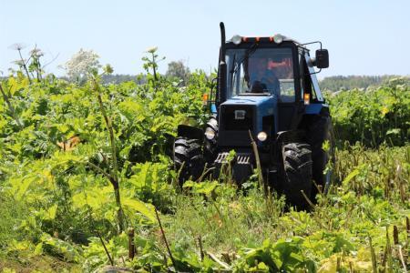 В Коломенском городском округе обработают 240 гектаров земли от борщевика Сосновского