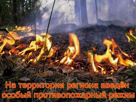На территории Подмосковья продолжает действовать особый противопожарный режим
