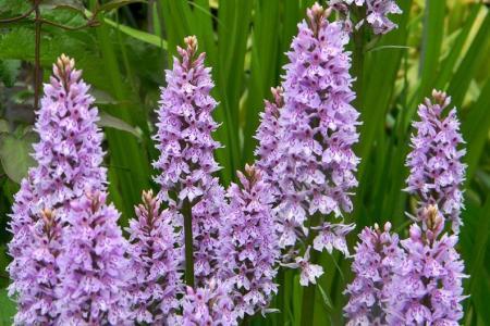 Обильные дожди привели к росту численности краснокнижных растений семейства орхидных