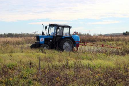 В Коломенском городском округе завершается химическая обработка от борщевика Сосновского