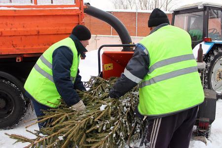 Новогодним елкам подарили вторую жизнь