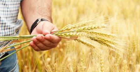 Конкурс по отбору начинающих фермеров