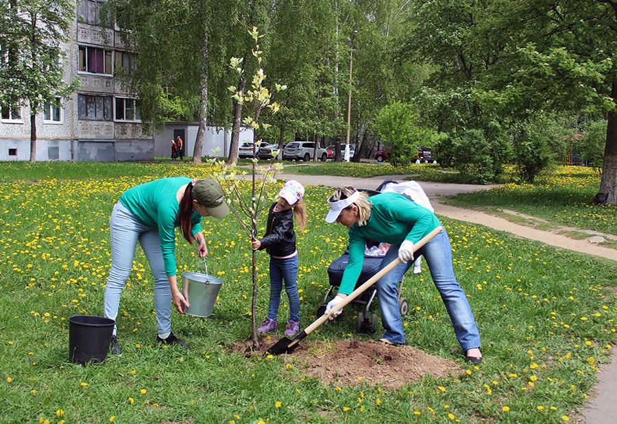 Новости Коломны   Коломенцы пришли на акцию «Лес Победы» семьями Фото (Коломна)   iz zhizni kolomnyi