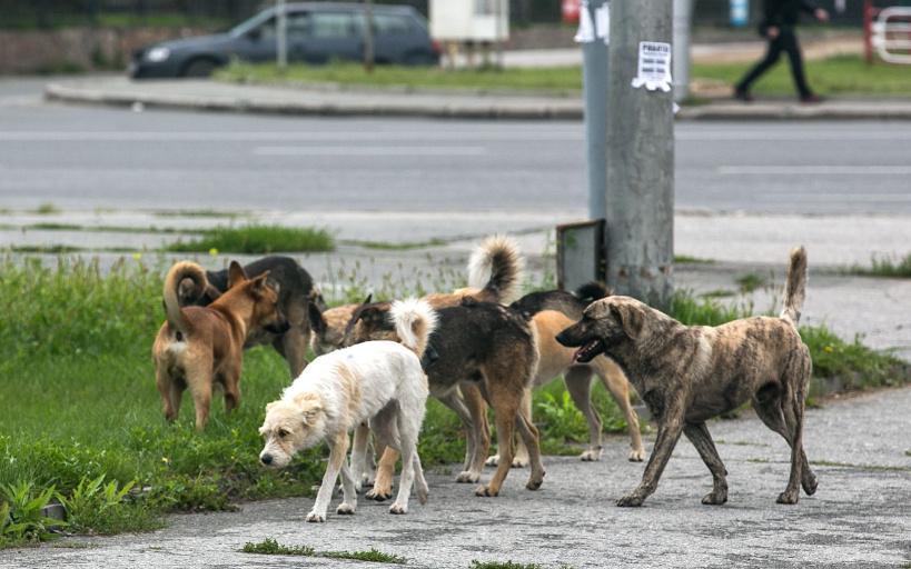 В Коломенском городском округе открыта горячая линия по вопросу безнадзорных животных