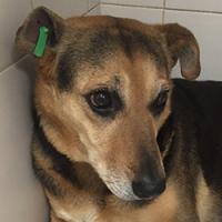 Новости Коломны   Памятка об обращении с собакой с биркой в ухе Фото (Коломна)   iz zhizni kolomnyi
