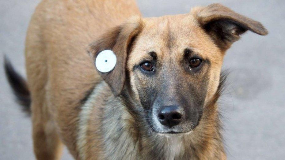 Новости Коломны   Как обращаться с собакой с биркой в ухе Фото (Коломна)   iz zhizni kolomnyi