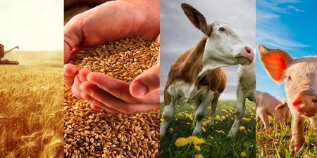 Конкурс по предоставлению грантов на развитие семейных животноводческих ферм