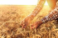 Конкурс по предоставлению грантов на поддержку начинающих фермеров