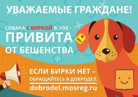 Собака с биркой в ухе привита от бешенства