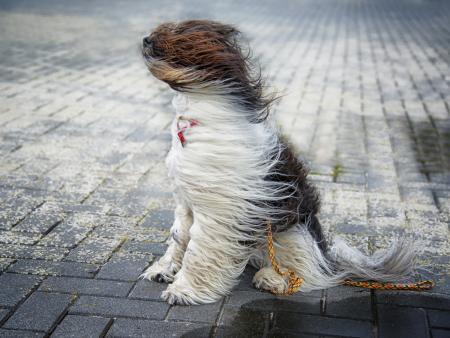 Штормовое предупреждение о неблагоприятных метеорологических явлениях