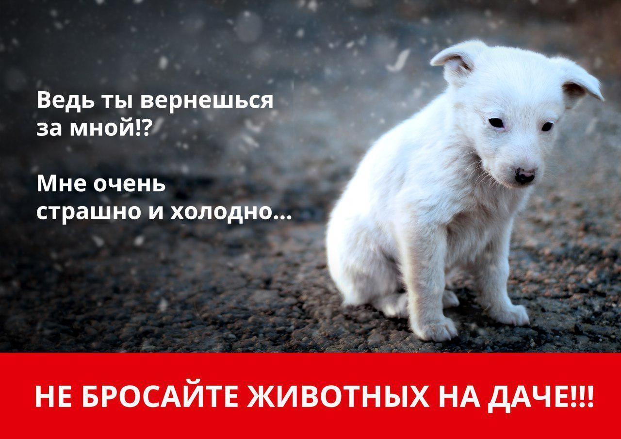 Не бросайте животных на дачах