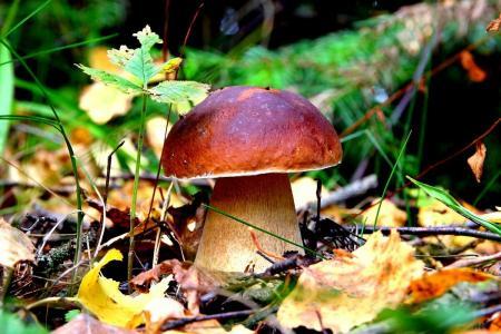 Рекомендации по профилактике отравлений грибами