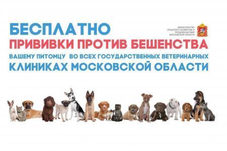 Здоровые питомцы: где в Коломне можно бесплатно привить домашних животных против бешенства
