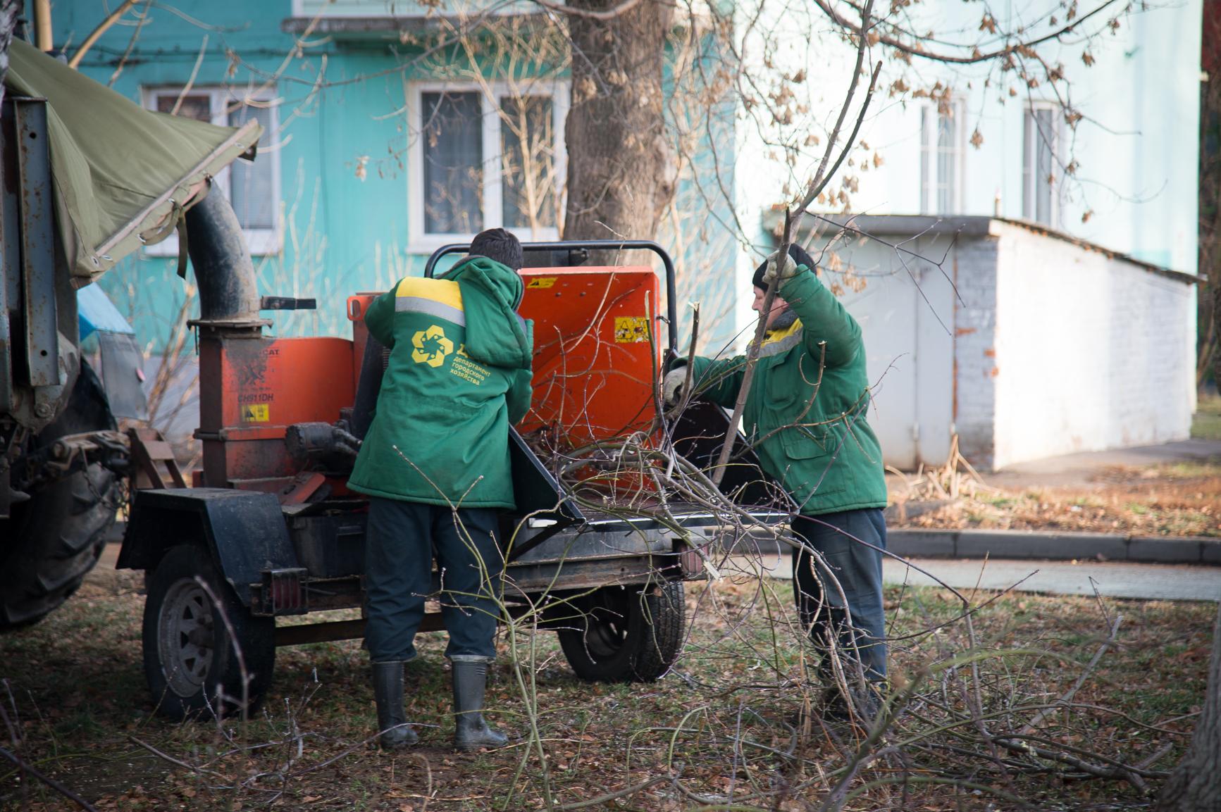 Активная пора кронирования деревьев наступила для коломенских коммунальщиков