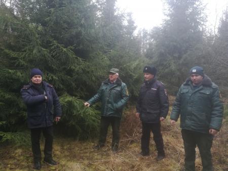 В коломенских лесах проводится операция «Елочка»