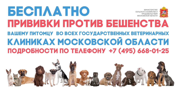 Новости Коломны   В государственных ветеринарных клиниках можно сделать бесплатную прививку против бешенства Фото (Коломна)   iz zhizni kolomnyi