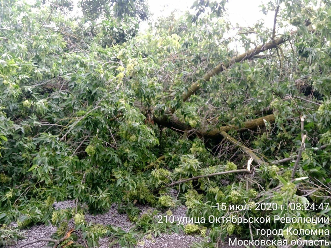 Больше 20 сигналов о поваленных деревьях получили от жителей в Департаменте городского хозяйства