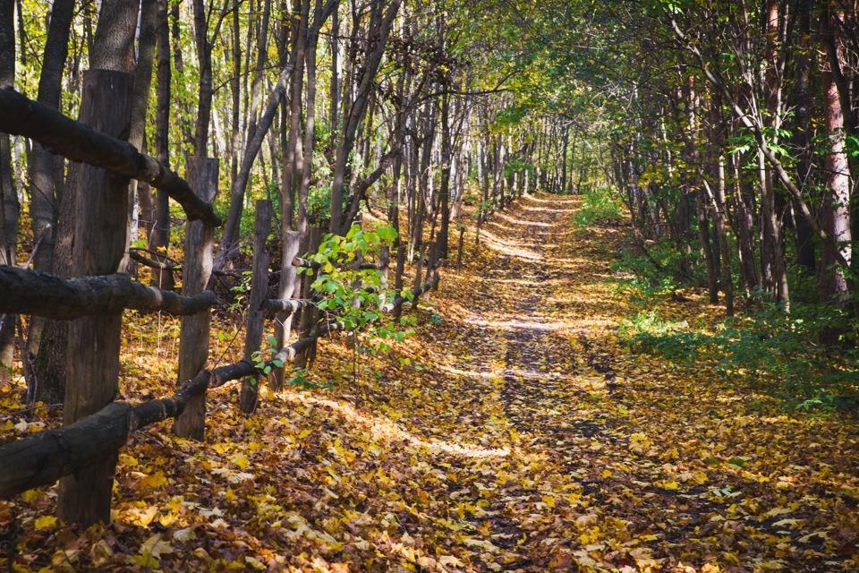 Памятка для любителей прогулок в лесу и грибникам