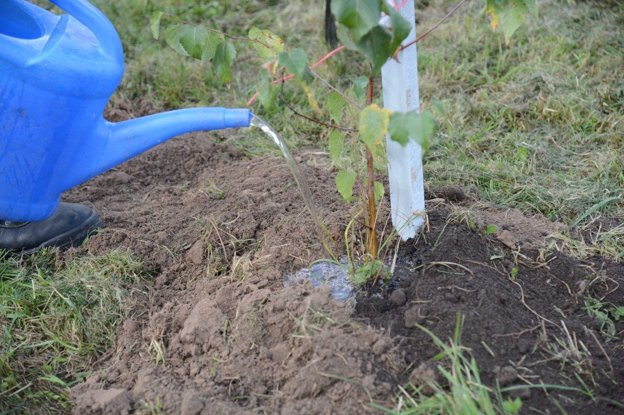 Коломенцам рассказали, как можно присоединиться к акции «Наш лес. Посади своё дерево»