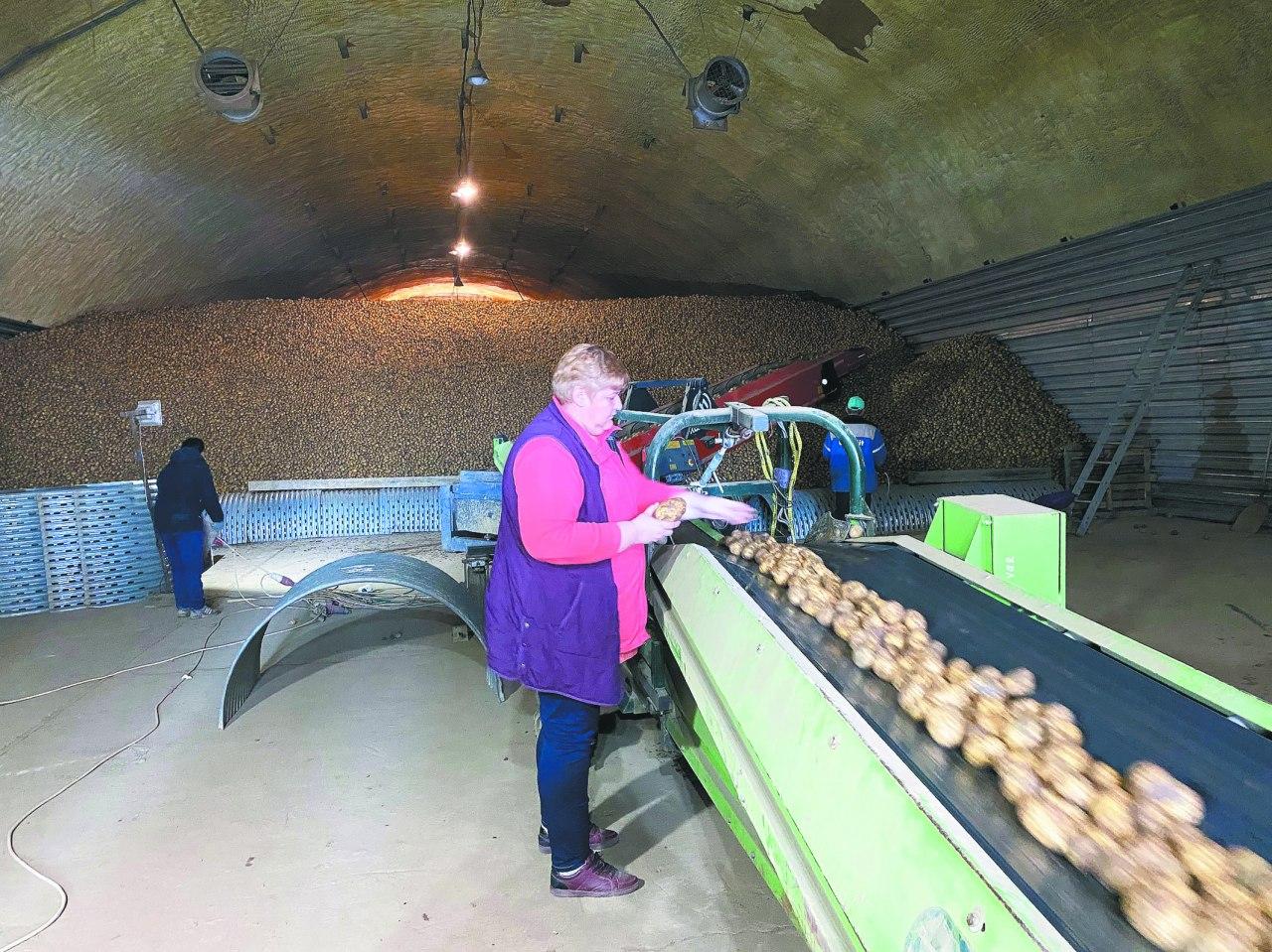 Более 40 крестьянско-фермерских хозяйств работают в Коломенском городском округе