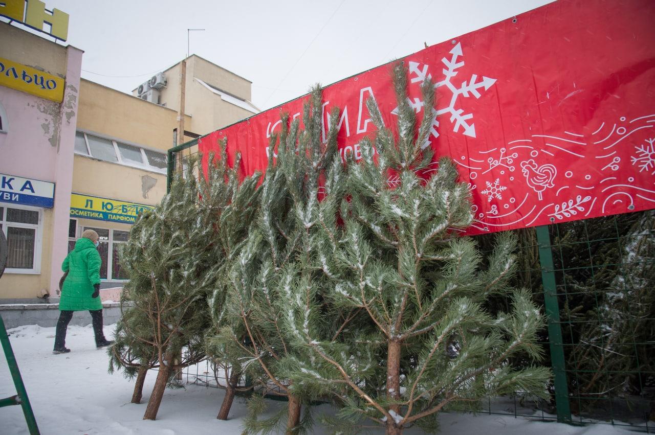 Ёлочные базары в Коломне предлагают жителям ассортимент новогодних хвойных украшений