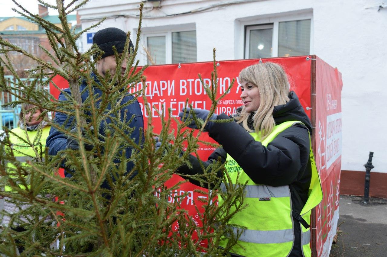 Шесть пунктов по сбору и утилизации новогодних деревьев откроются в Коломенском г.о. в рамках областной эко-акции
