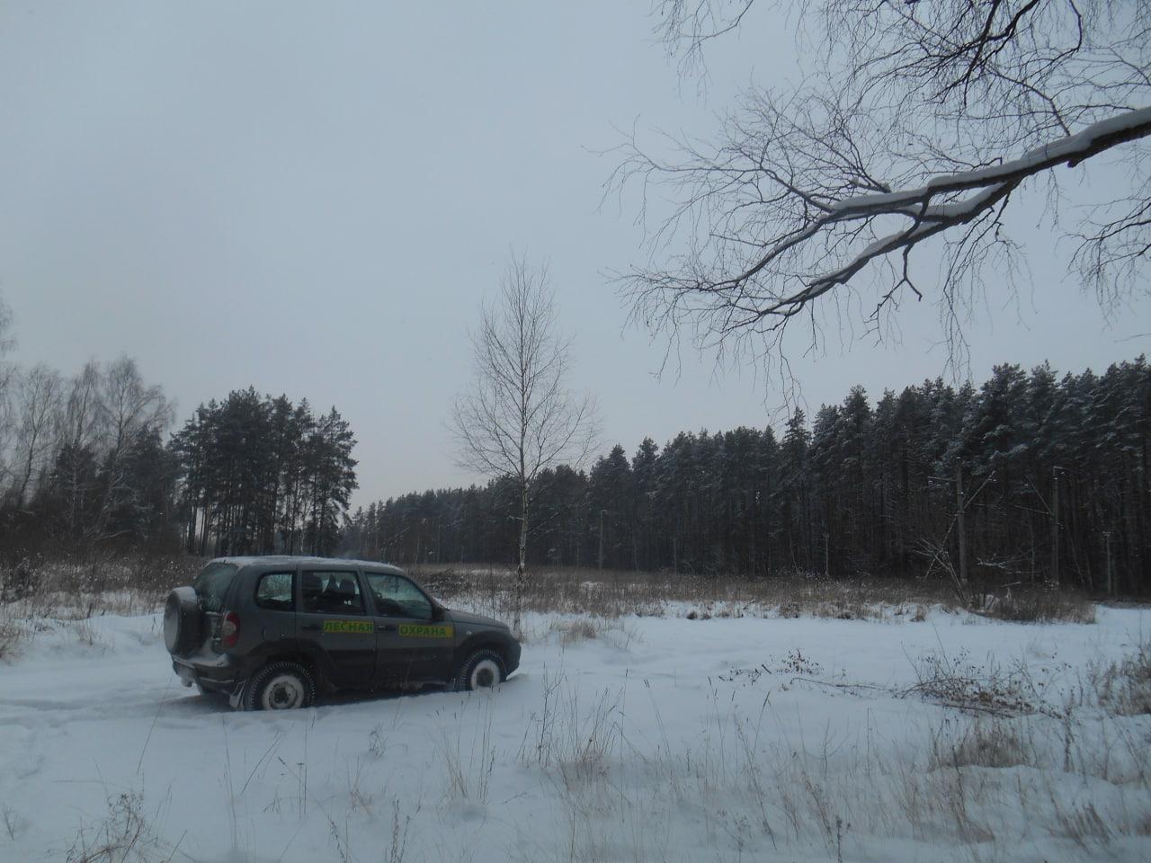 На коломенских землях лесного фонда проводят профилактические осмотры
