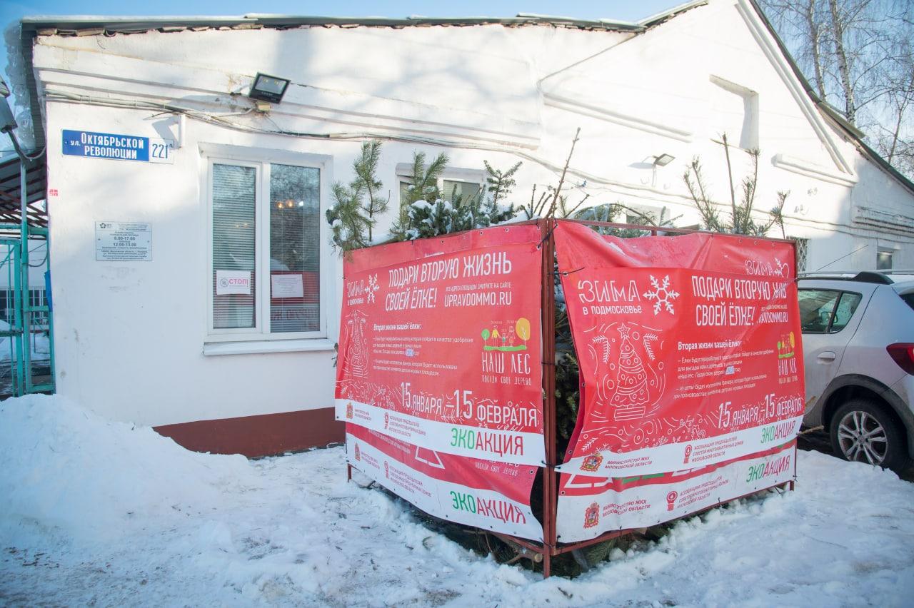 Пункт утилизации живых новогодних елей возле РЭУ «Москворецкий» стал лидером по числу собранных деревьев