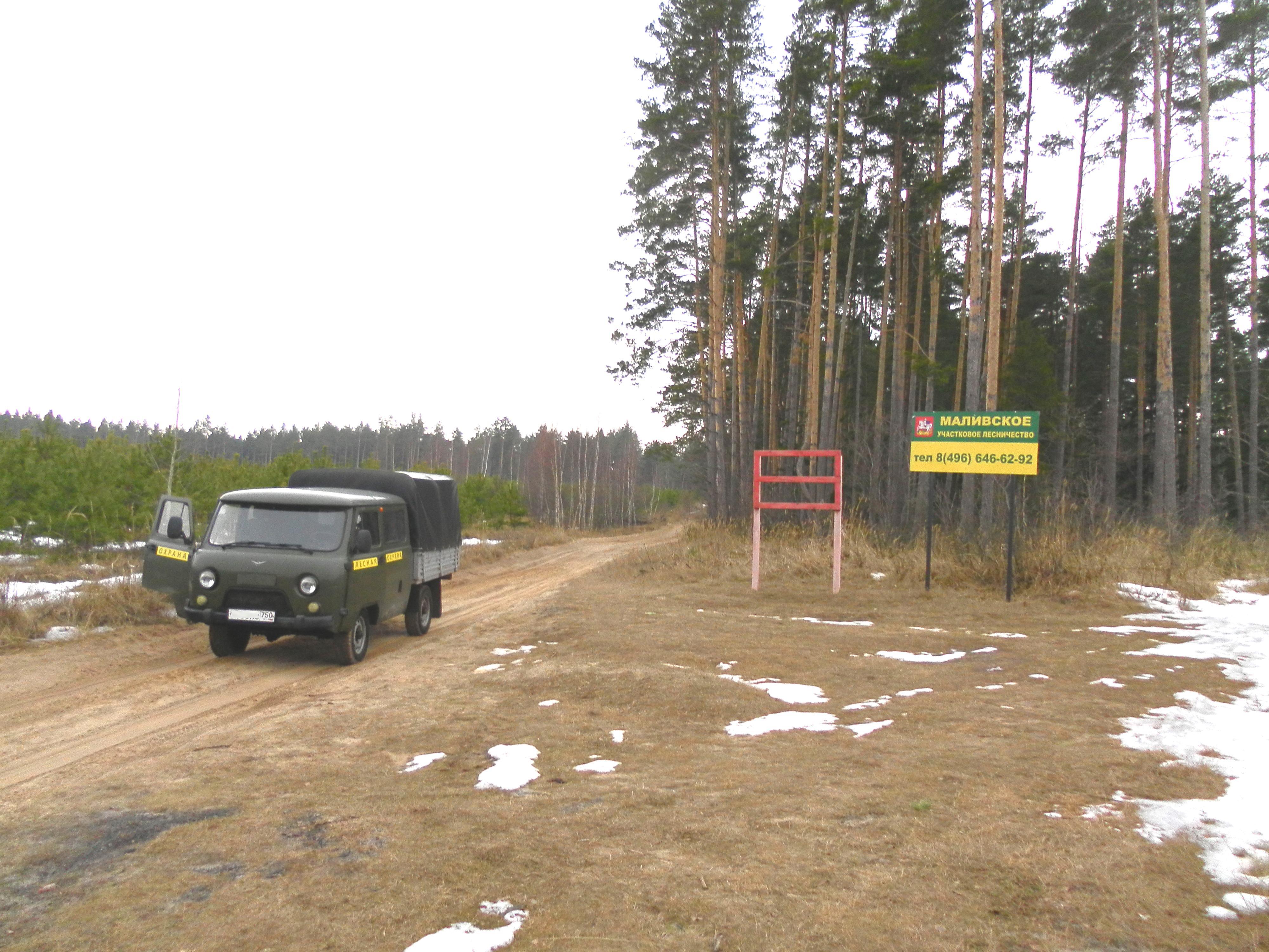 В лесничестве вблизи коломенских населенных пунктов пройдут санитарно-оздоровительные мероприятия
