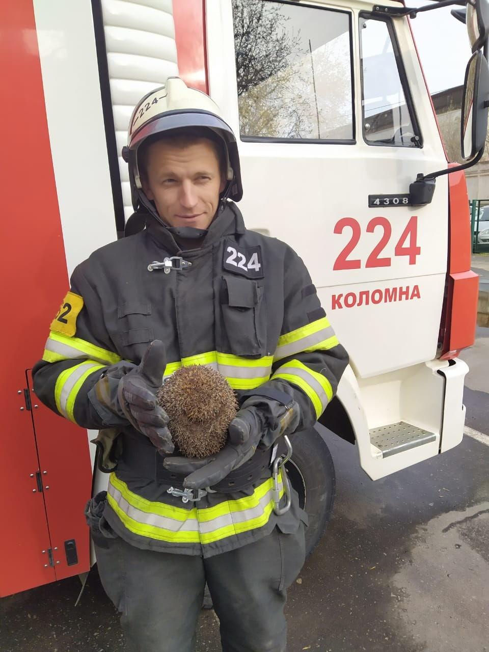Лесного ежика спасли сотрудники дежурного караула 224 пожарной части Мособлпожспаса во время тушения пожара в коломенском гаражном кооперативе